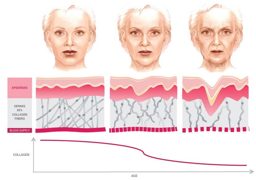collagen age